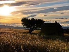 Cabanon de Haute-Provence entouré de blé dur